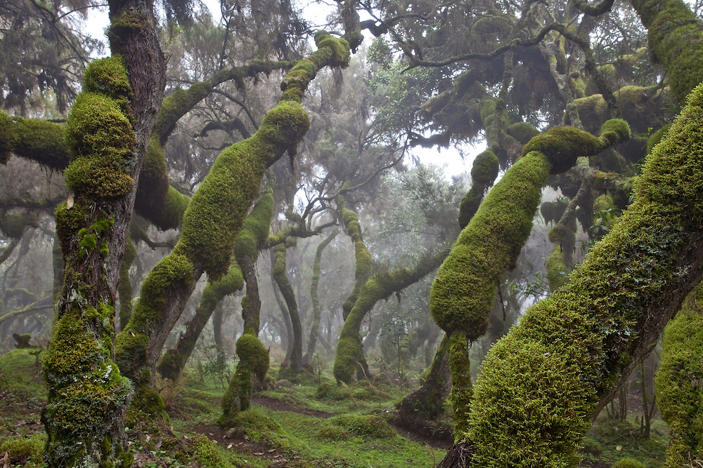 Кофе Эфиопия Sidamo Gr.1 Bale Mountains	 Кофелот